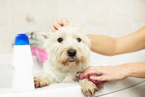 Las armas secretas para combatir los olores de mascotas