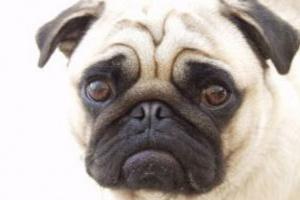 Eutanasia del perro: ¿Cuándo es hora de decir adiós?