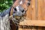 Problemas de comportamiento en caballos