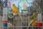 5 razones por las cuales las aves son mascotas perfectas