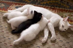 Cuidado postnatal de los gatos y posibles problemas