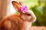 Insuficiencia renal en conejos