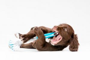 Objetos extraños atrapados en la garganta en perros