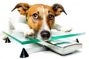 Consejo de vacaciones saludables: ¡Pierde libras con tus perros!