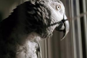 ¿Cómo ayudar a su ave si se encuentra deprimida?