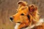 Cáncer de riñón (adenocarcinoma) en perros