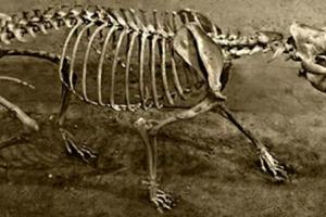 Frecuencia de la micción relacionada con el tamaño del cuerpo del perro