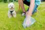 ¿Qué causa las heces anormales del perro?