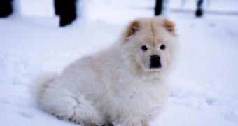 Toxicidad por ivermectina en perros