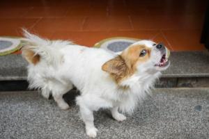 Vocalización excesiva en perros