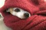 ¿Consiguen los perros la depresión del invierno?