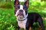 Arritmias después del trauma del corazón embotado en perros