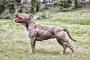 Producción anormal de proteína en perros