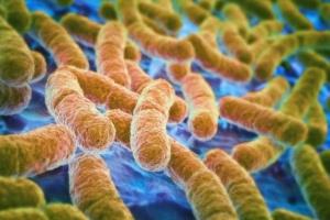 Infección por E. coli en perros: síntomas, causas y tratamientos.