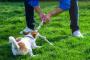 Cómo detener a su perro tirando de la correa