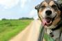Parásito intestinal (Coccidia) en perros