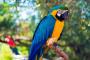 Identificación de aves: loros azules más comunes