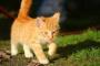 10 formas de saber si tu gato es feliz