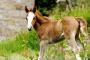 Diarrea en caballos