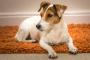 Cataratas en perros: todo lo que necesitas saber