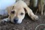 ¿Importa si mi perro viene de un molino de cachorros?