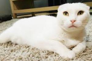 Tumores óseos / Cáncer en los gatos