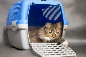 La seguridad de su mascota en emergencias