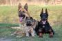 Las 10 mejores razas de perros que viven más tiempo