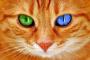 Gatos esterilizados: el procedimiento