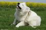 Consejos simples para perros con picazón