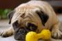 Tratamientos para el estreñimiento canino