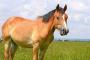 Envenenamiento forrajero en caballos