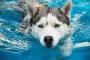 Consejos de seguridad para nadar con perros