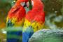 5 aves que son muy coloridas