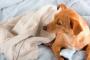 Embarazo Falso Canino y Reproducción Femenina
