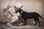Perros veteranos que sufren de trastorno de estrés postraumático