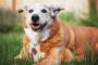 Rituales de recuerdo: lo que algunas personas hacen para honrar a sus mascotas cuando mueren.