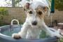 Mantenga su cachorro limpio y sin pulgas