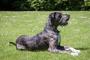 Hinchazón en perros: síntomas y prevención.