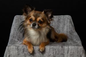 Aceite de coco para perros: 9 increíbles beneficios para la salud