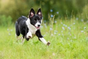 Las plantas tóxicas podrían dañar a su mascota