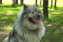 Hiperparatiroidismo en perros