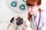 Tratamiento oral contra pulgas y garrapatas.