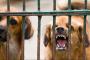 Vacunar a mi perro por la rabia, ¿vale la pena el riesgo?