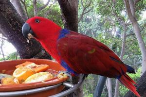 ¿Es posible alimentar a su ave con comida humana?
