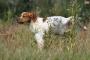 Cómo tratar la ITU en perros: remedios caseros y opciones de medicina