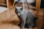 ¿Es su apartamento suficientemente grande para su gato?