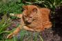 Envejecimiento de los gatos: ¿Qué es normal, qué es la enfermedad?