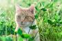 Cómo evitar emergencias de gatos de vacaciones