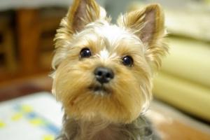 Cómo elegir un desparasitante para perros